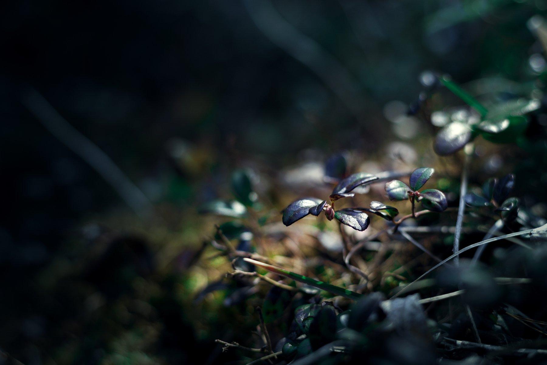 макро, природа, листья, Попов Станислав