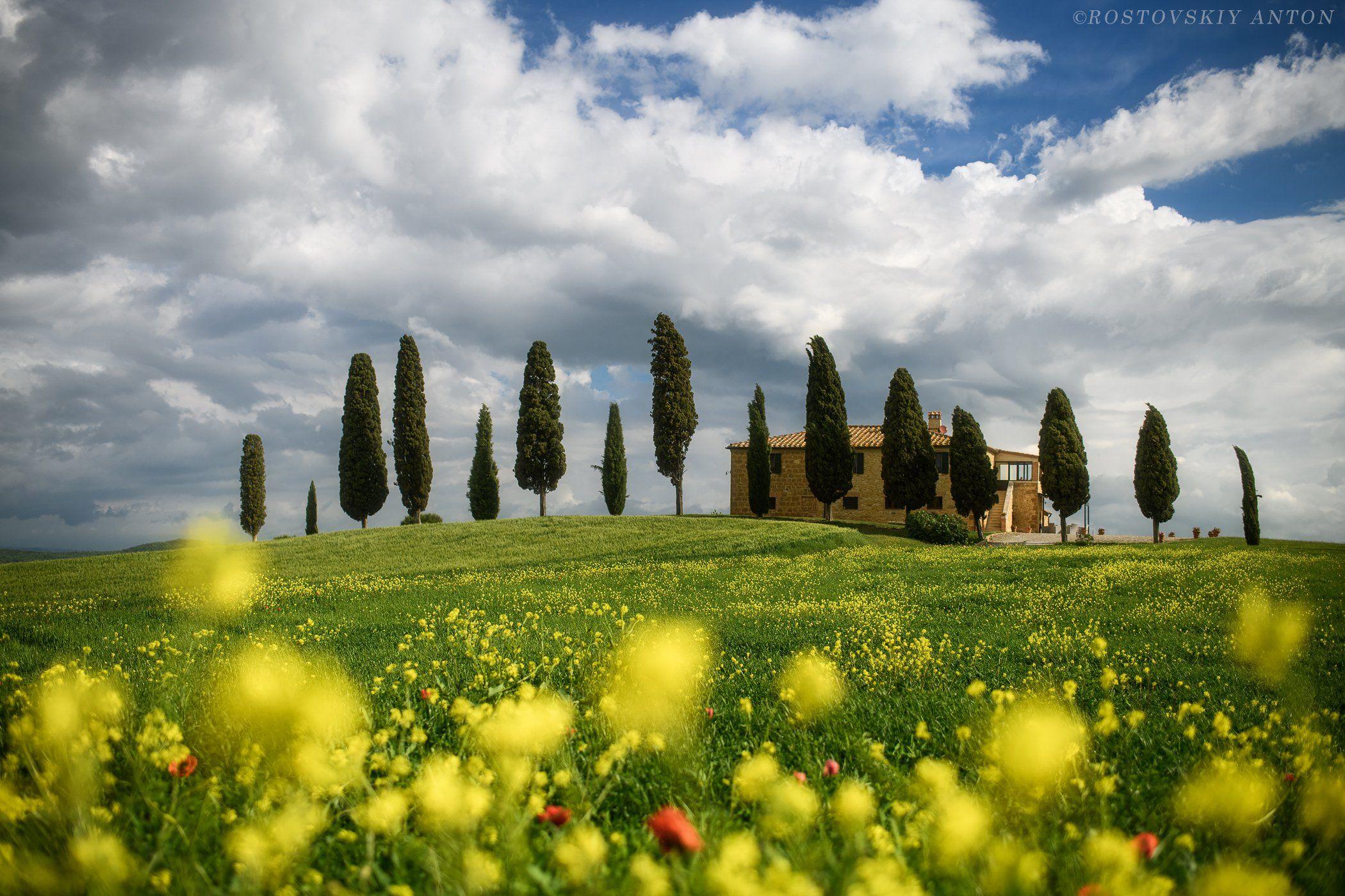 Tuscany, Italy, кипарисы, Тоскана, весна, цветы, фототур, фотопутешествие, Ростовский Антон