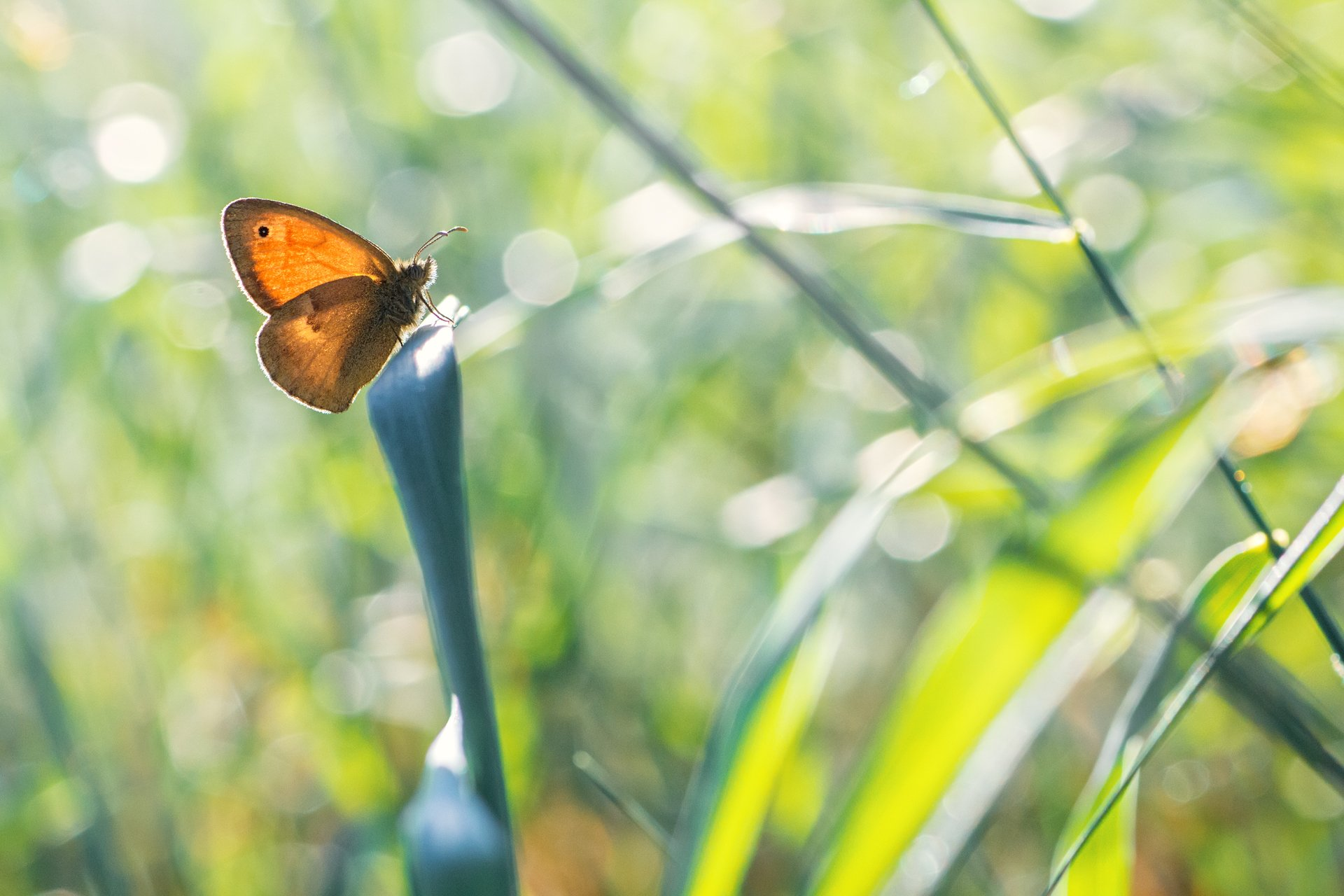 бабочка,лист,трава,солнце,крылья,свет,блик,цветок, Котов Юрий