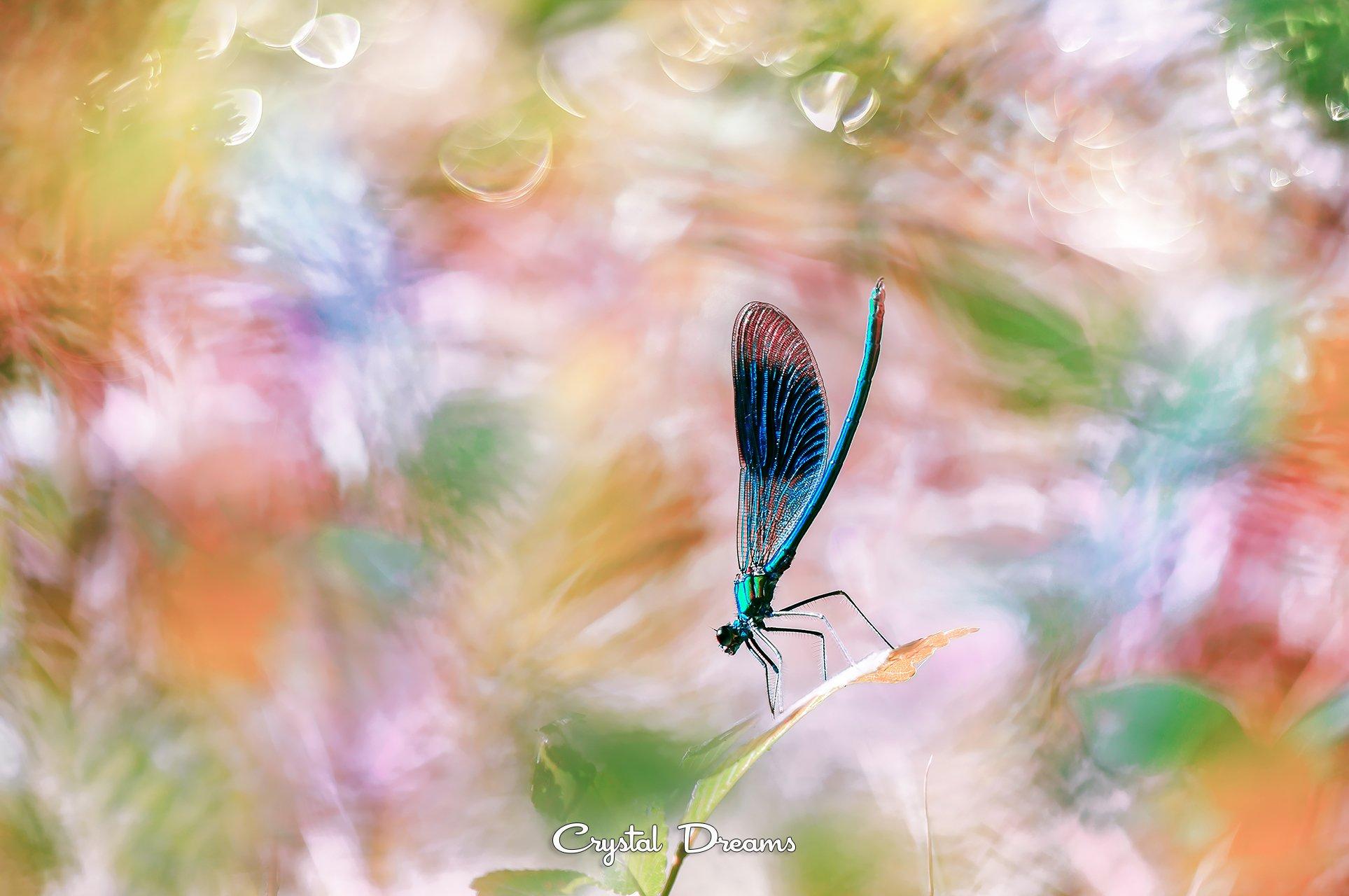 crystal dreams, macro, summer, color, art, nature, dragonfly, Крылова Татьяна