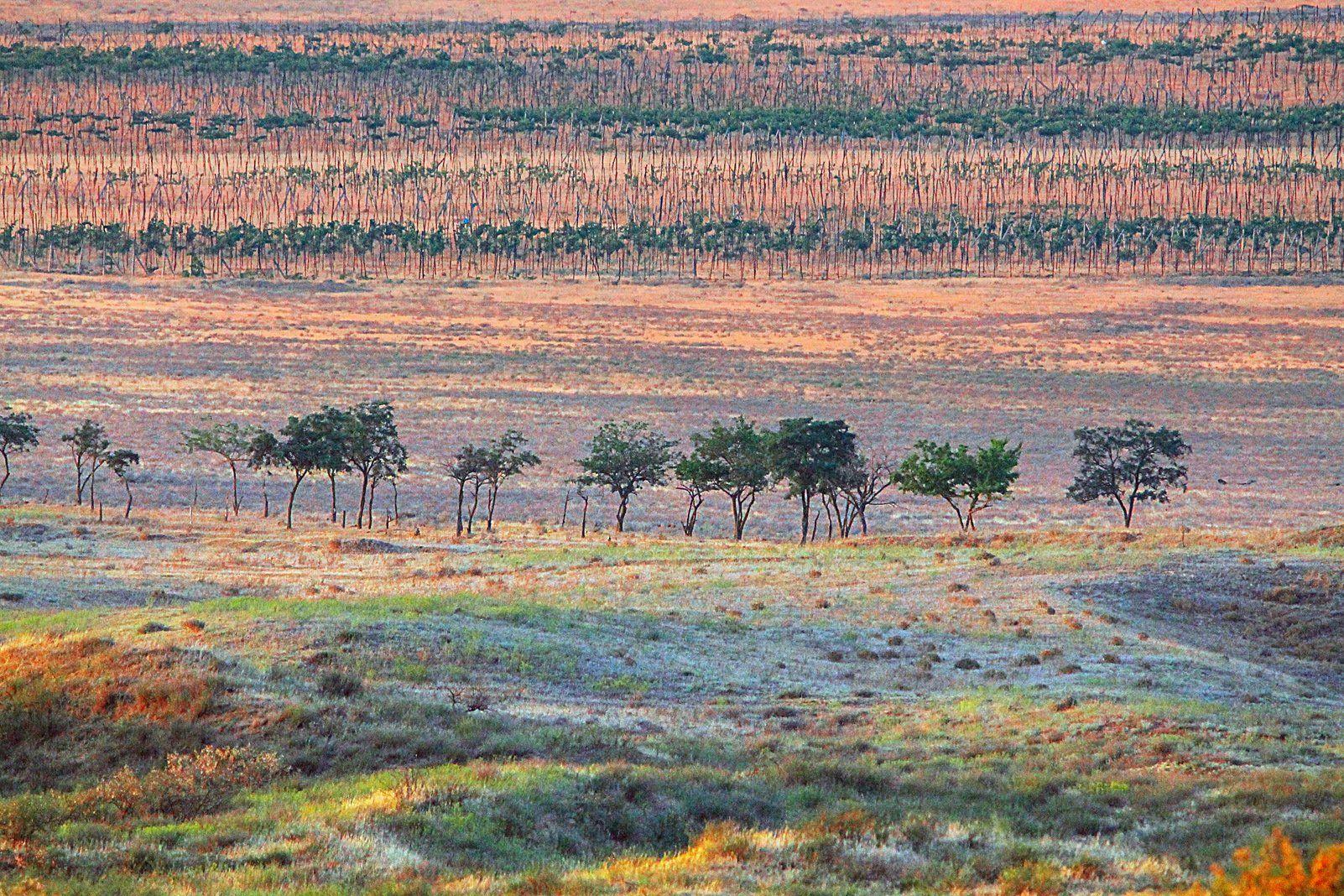 виноградник, поле.степь,пейзаж,дагестан., Magov Marat