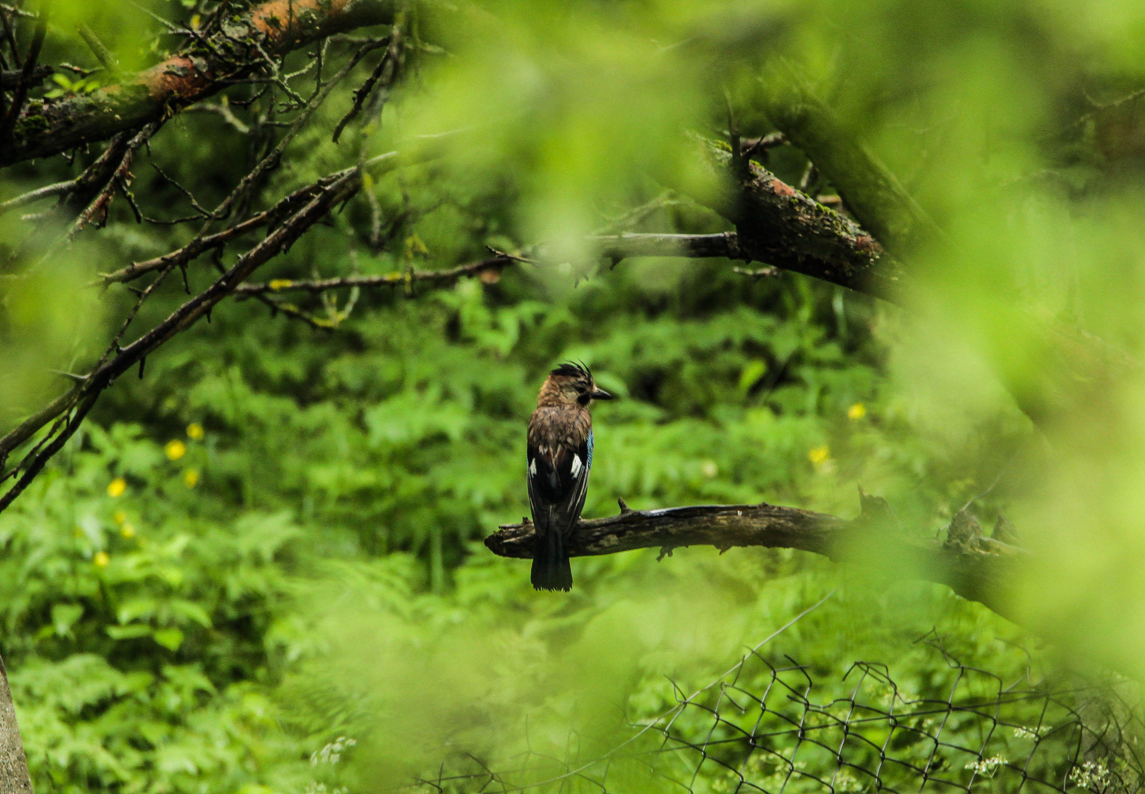 птица,птицы,природа, Magov Marat