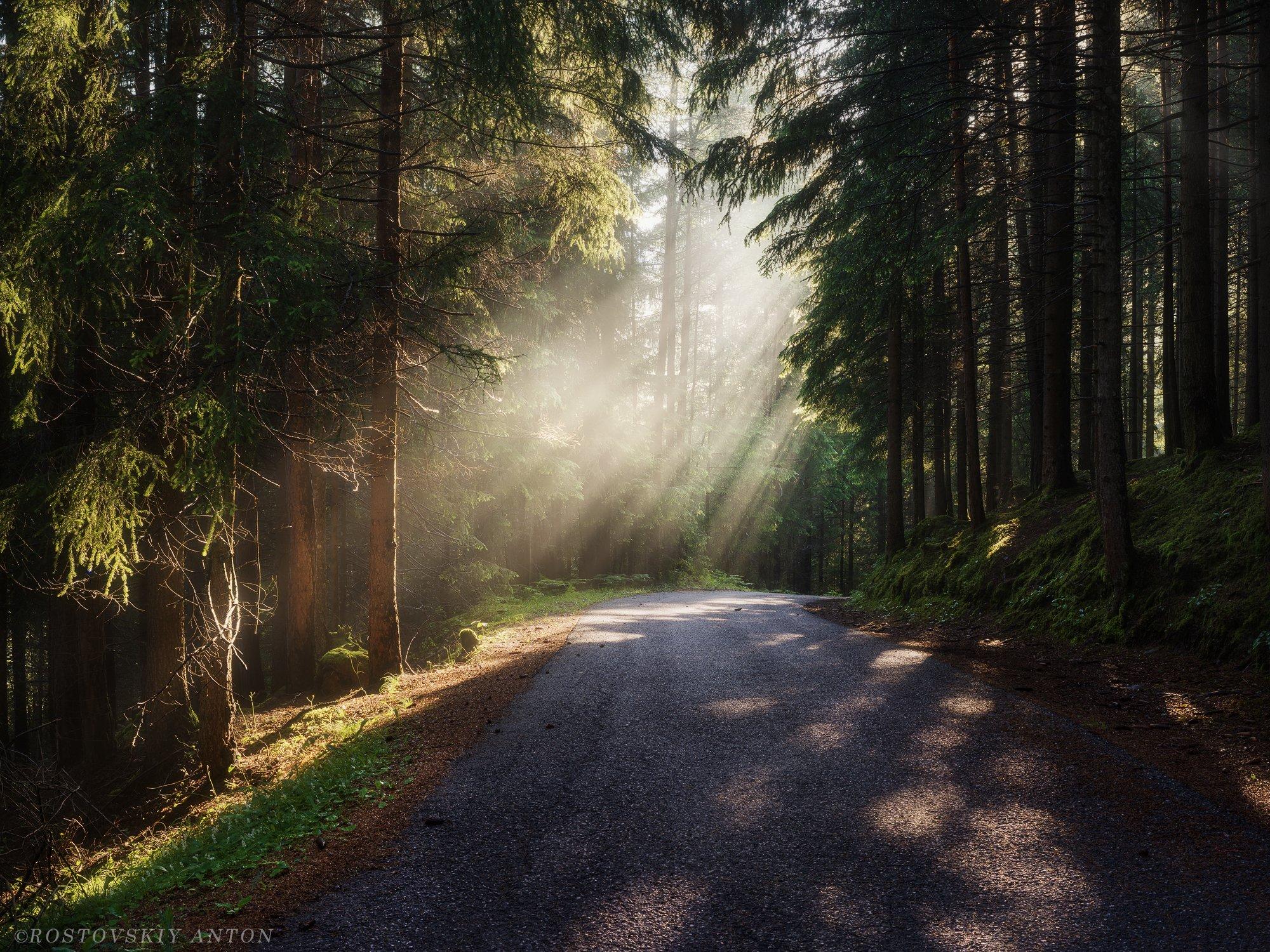 Доломиты, дорога, туман, фототур, лес, лучи, альпы, деревья, Ростовский Антон