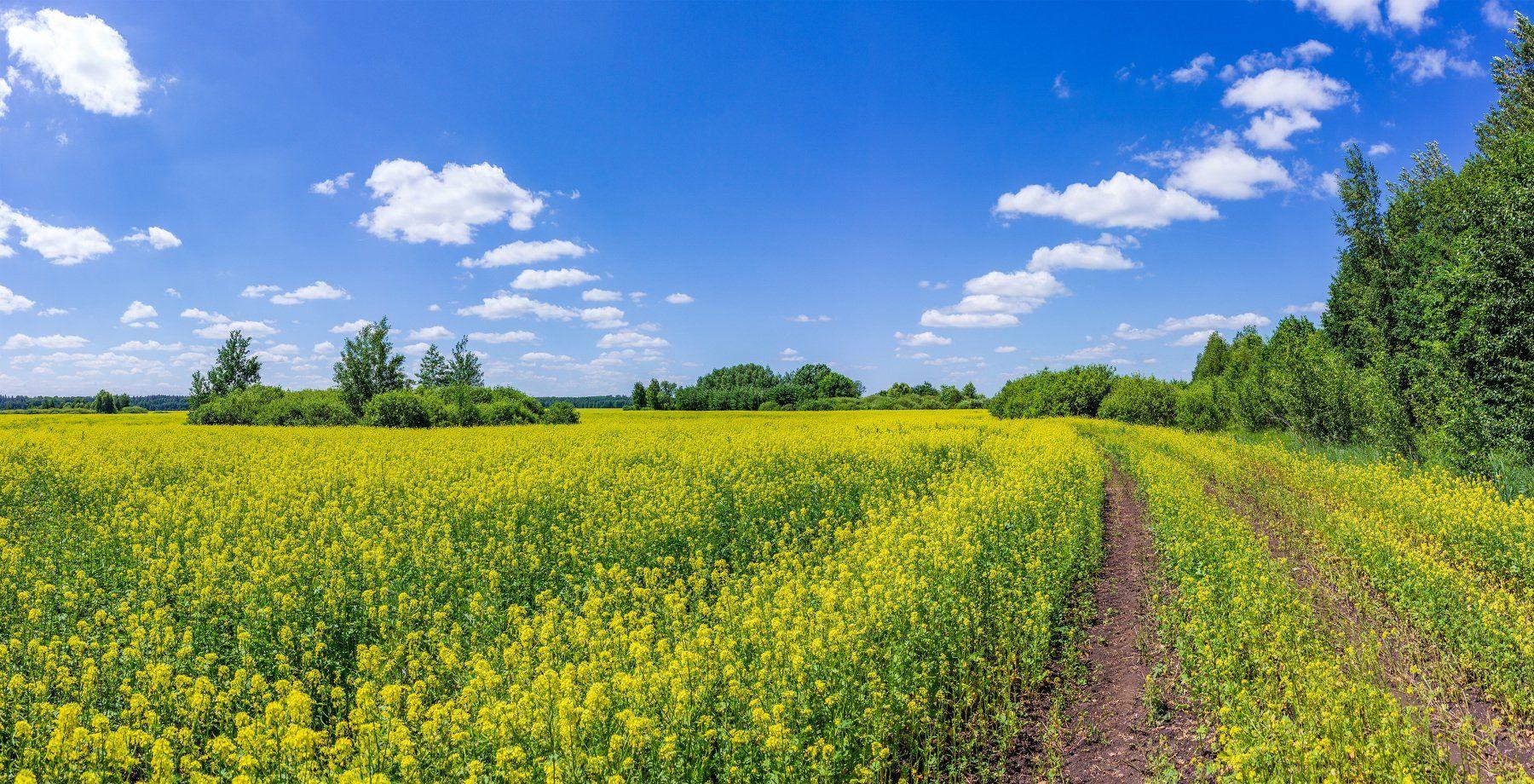 лето, дали, облака, дорога, дороги, поле, Руслан Востриков