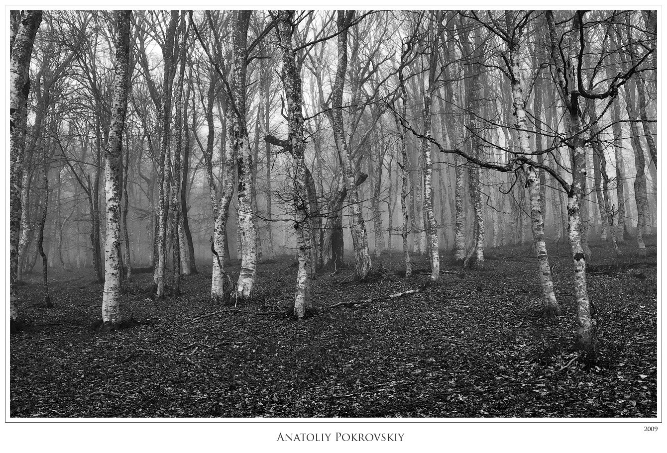 крым, горы, туман, лес, бук, берёза, осина, весна, анатолий покровский, Анатолий Покровский