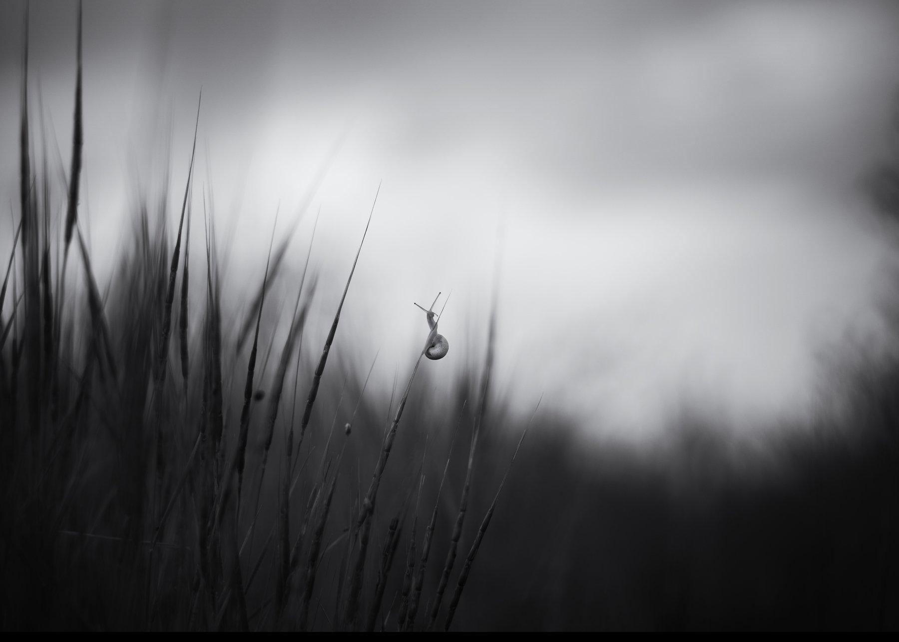 улитка чб пейзаж трава, Игорь Крюков