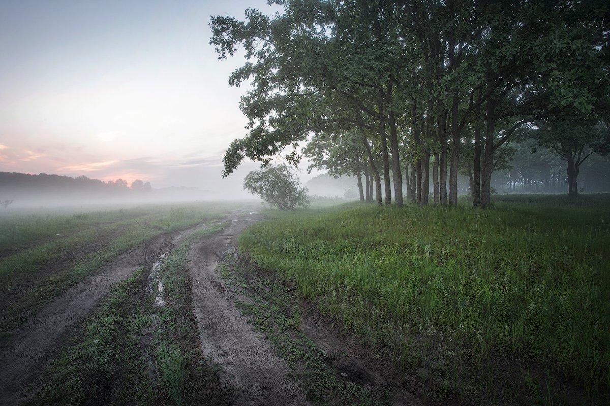 природа утро солнце туман деревья, Корнилов Михаил