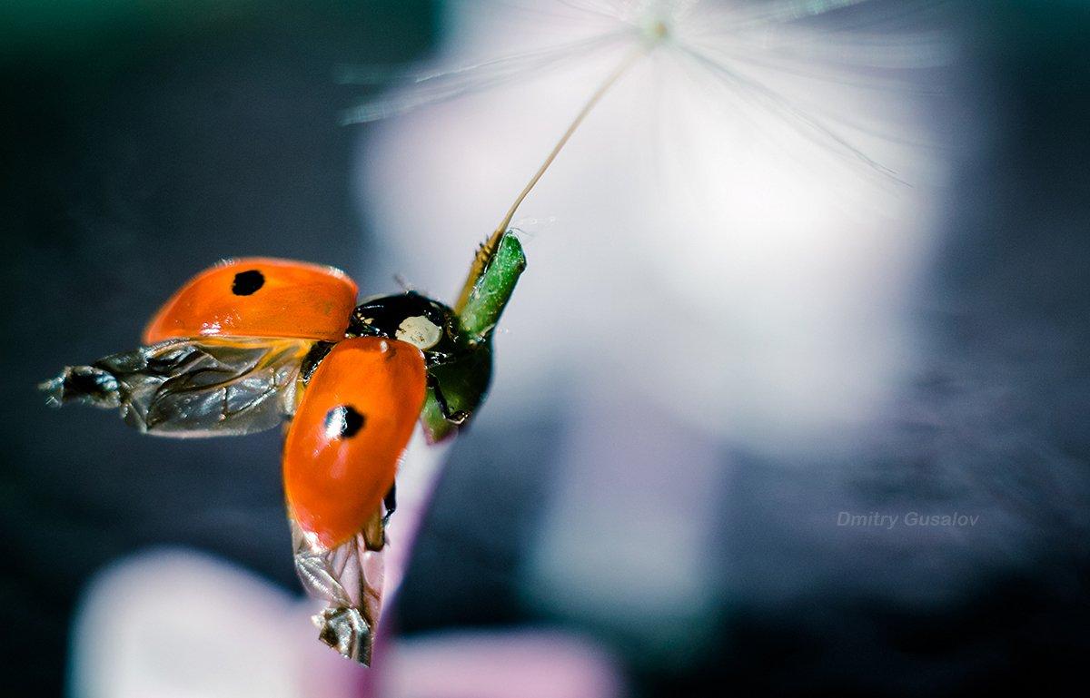макро, природа, весна, макросъёмка, макрофотография, растение, цветы, жизнь, макромир, Дмитрий Гусалов