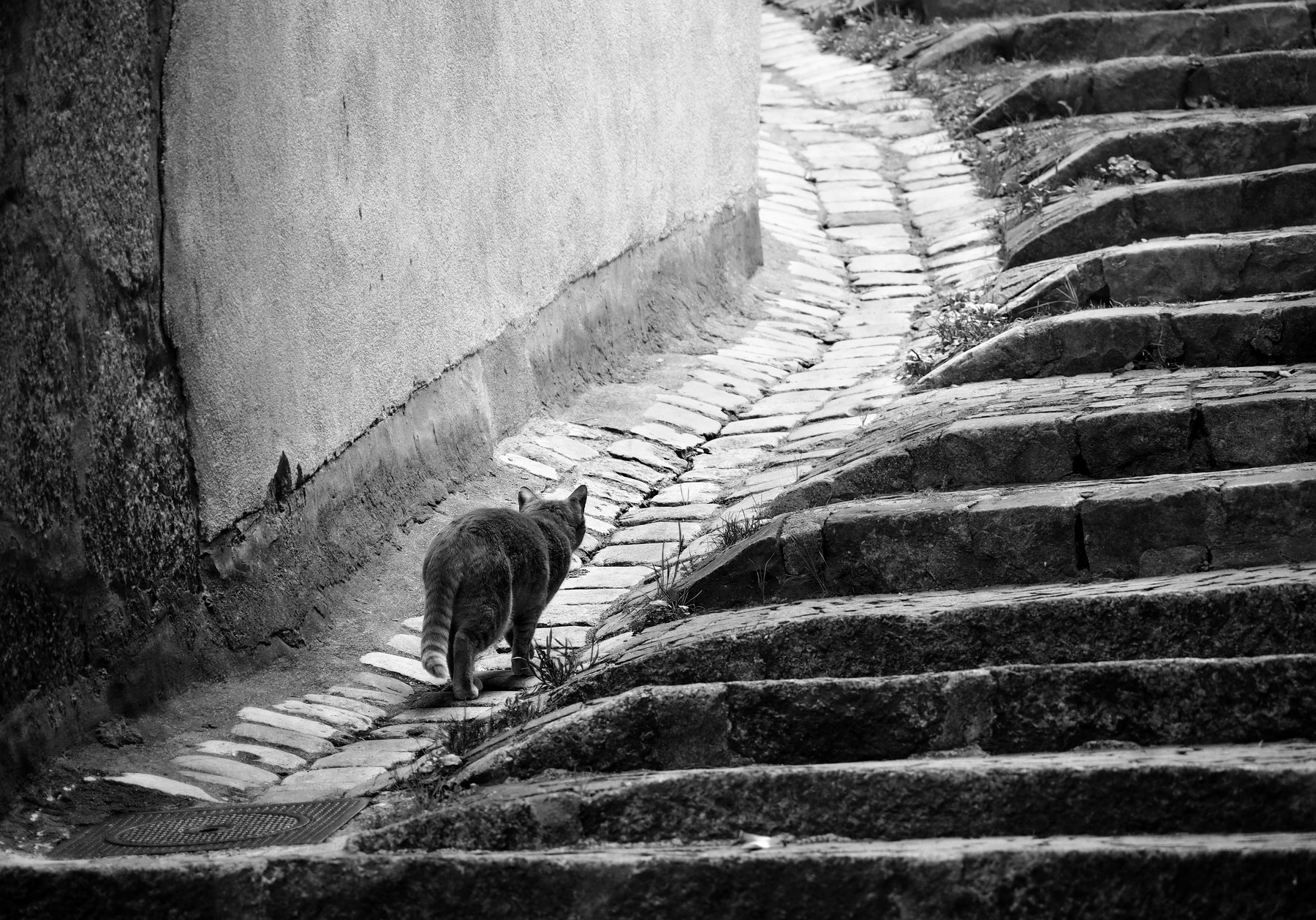 cat, city, path, stairs, way, old, road, animal, monochrome, geometry, stones, wall, Endegor