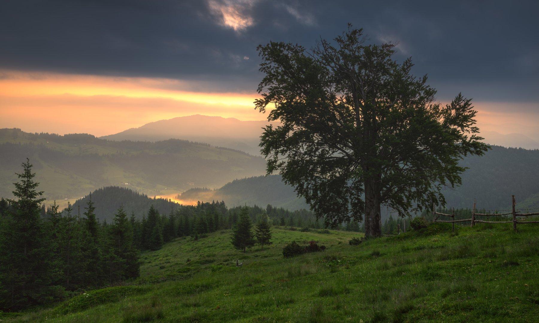 карпаты, черногорский хребет, полонина смотрич, дземброня, Зинченко Роман