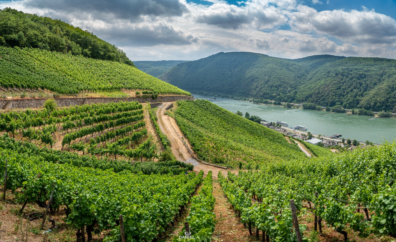 germany, vineyards, landscape, summer, Daniel Malinowski
