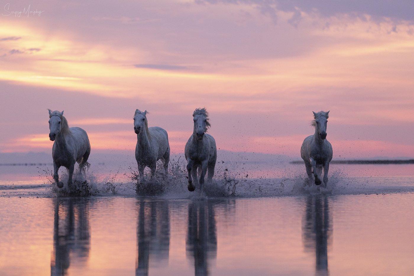 camargue horses sunrise, Merphy Sergey