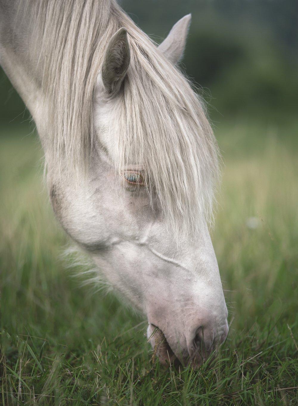 лошади, свет, утро, природа, Баранов Олег