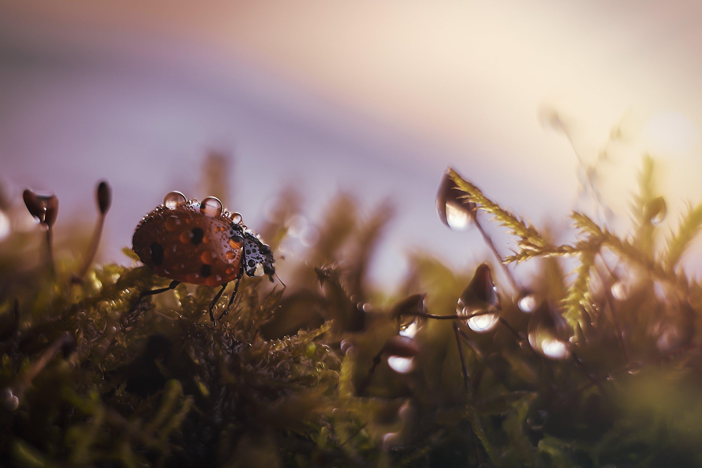 божьякоровка жуки закат насекомые гелиос44, Третьякова Анастасия