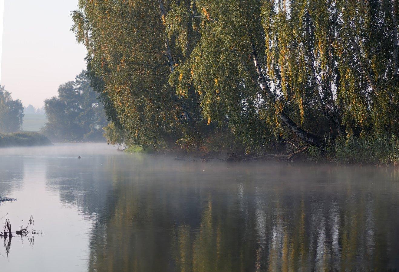 утро, река, дымка,, Сергей Шабуневич