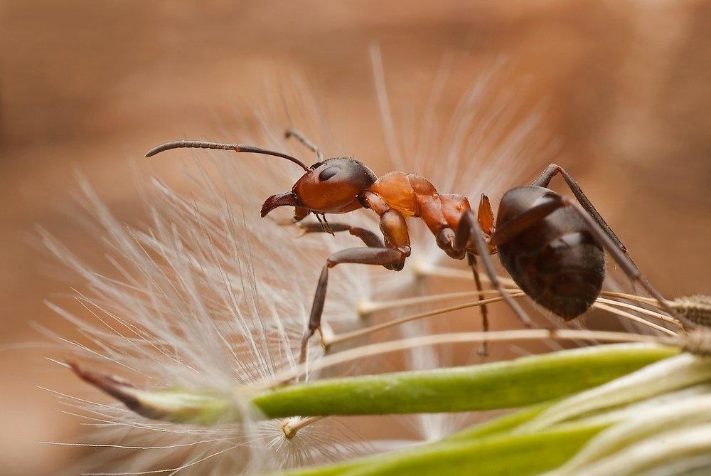 mrówka.., Rafal Karalus
