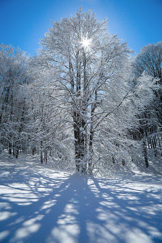 winter, sun, tree, snow, crimea, ukraine, nature, landscape, canon, back light, Irene Mei