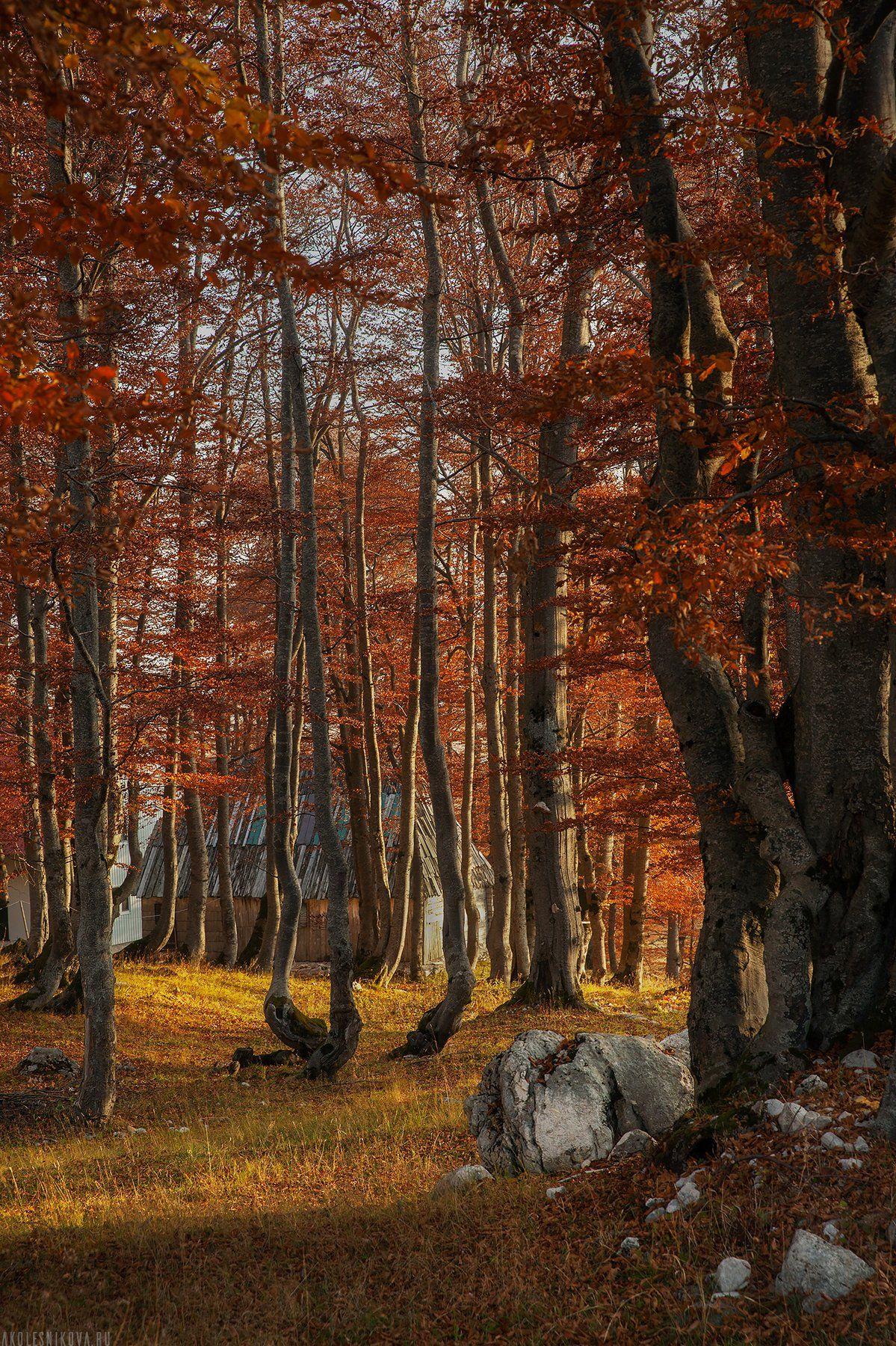 пейзаж, черногория, путешествие, лес, природа, осень, утро, рассвет, Анастасия Колесникова