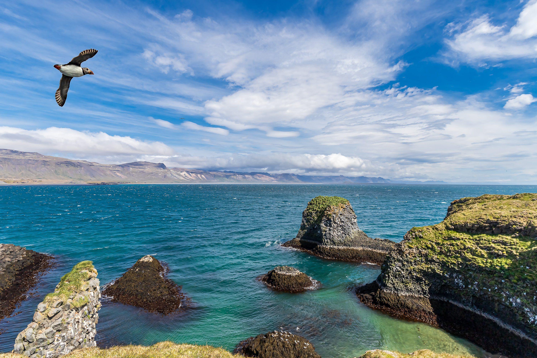 остров, берег, океан, пейзаж, пафин, скалы, берег, Левко Юрий