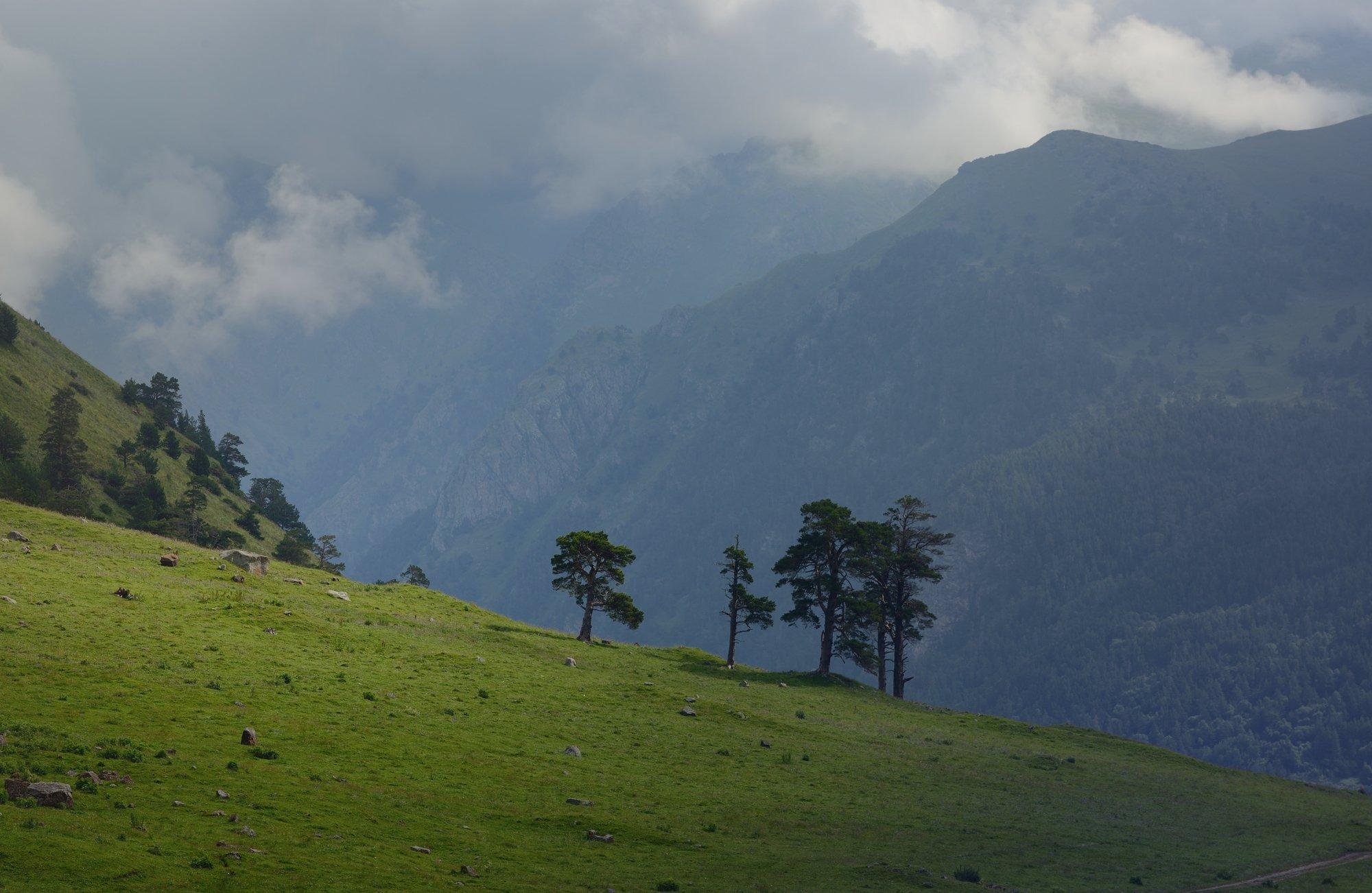 горы лето кавказ маруха, Александр Жарников
