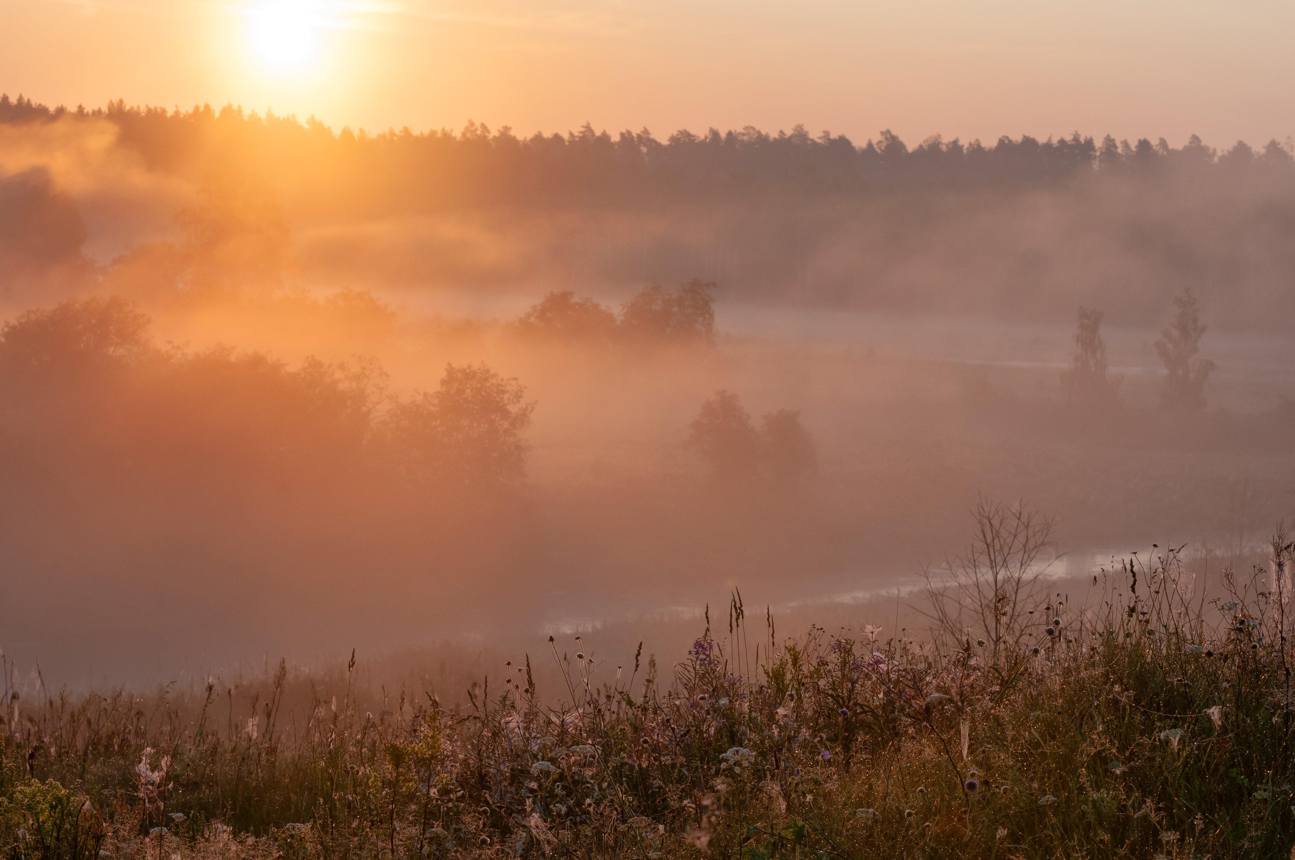 июль, лето, утро, восход, туман, природа, Yakovlev Artur