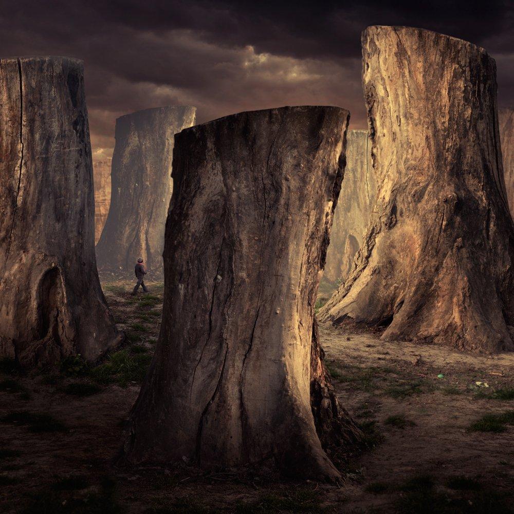 sky, light, clouds, tree, child, walk, alone, wood, magic, mystery, journey, bow, Caras Ionut