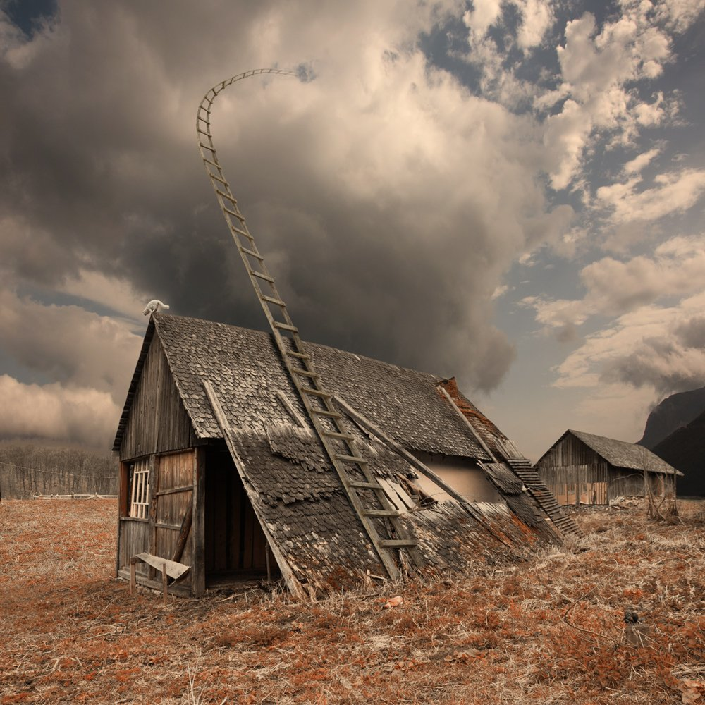 forest, cat, clouds, roof, alone, wood, abandoned, mounting, high, ladder, visitor, souse, Caras Ionut