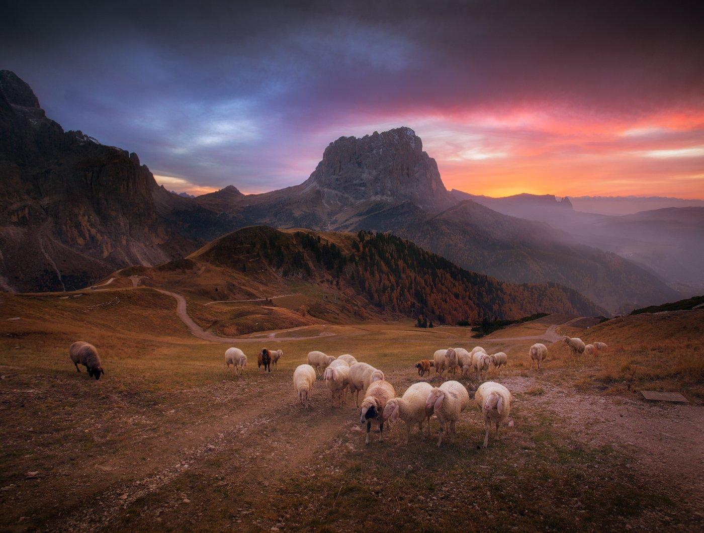 Вечер, горы, италия, закат, овцы, стадо, небо, облака, Cтанислав Малых