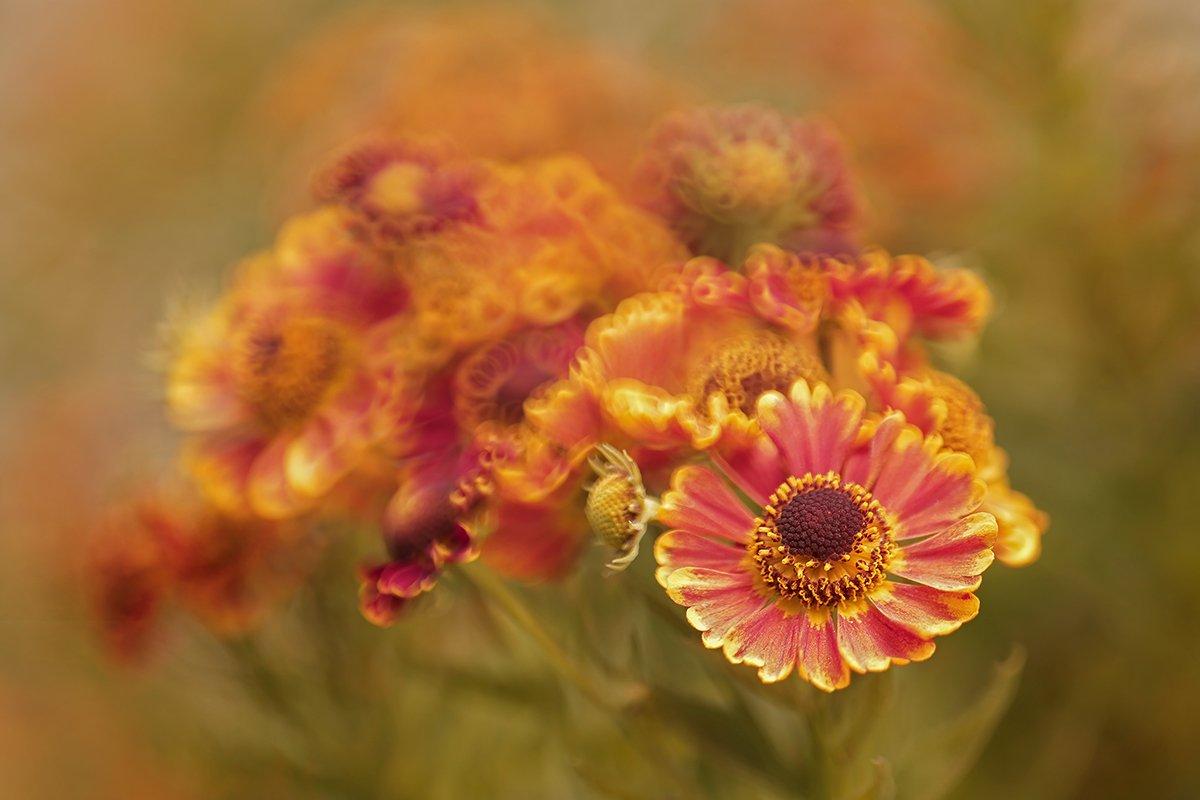 kwiaty,polne,lato,bokeh,martwa natura, flowers, nature, still live, Grażyna Nowotna