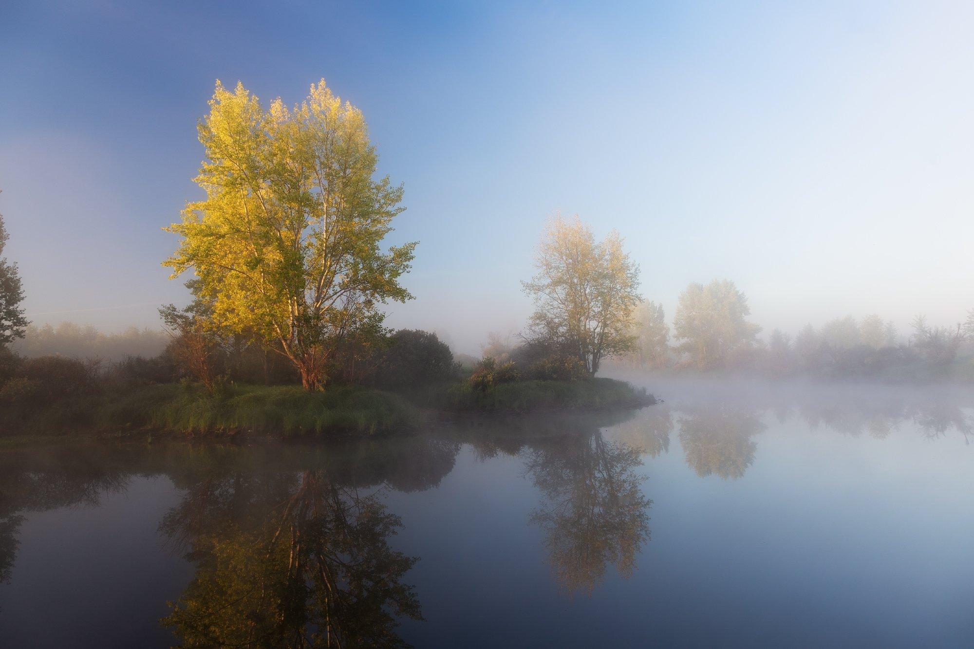 утро, туман, протока, деревья, отражения,  Гобова Наталья