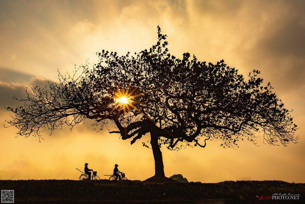 quanphoto, landscape, sunset, sundown, rural, countryside, farmers, lonely_tree, vietnam, quanphoto