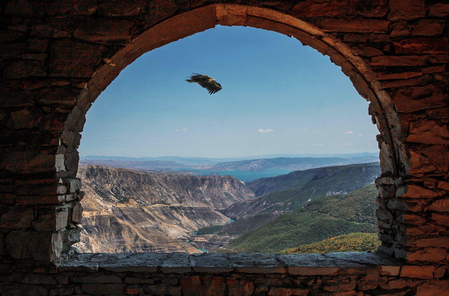 горы,каньон,пейзаж,природа,гриф,белоголовый сип,дагестан., Magov Marat
