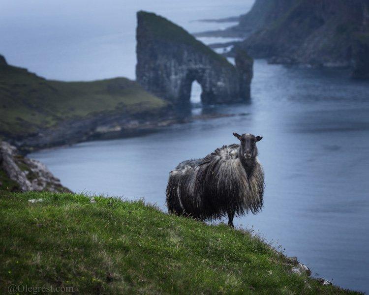 фареры фарерские острова овцы скала океан, Rest Oleg