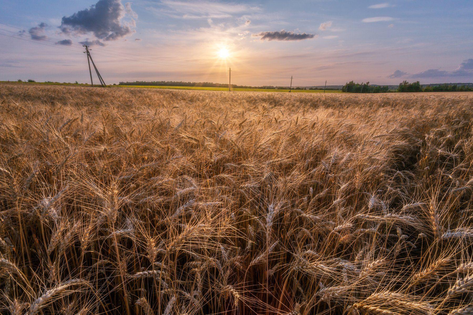 природа, пейзаж, закат, поля, тула, Мартыненко Дмитрий