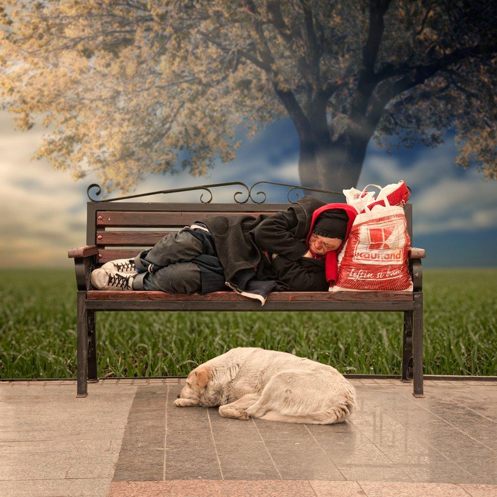 sky, morning, freedom, dog, bench, grass, woman, friend, ground, free, bag, sleeping, wet, Caras Ionut
