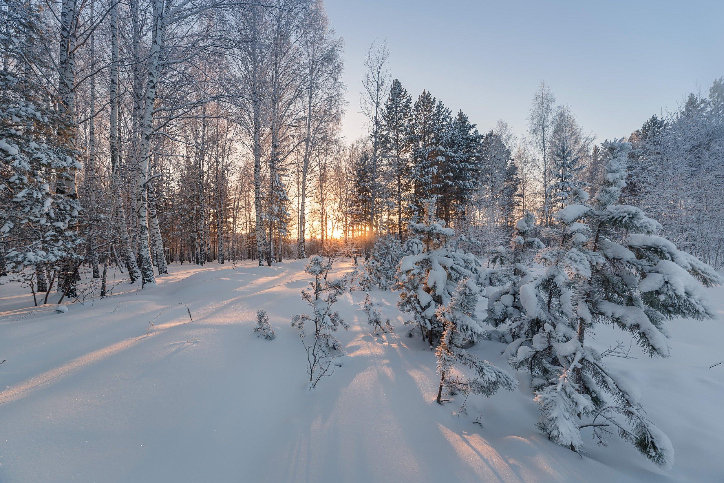 зима, лес, иней, мороз,  Гобова Наталья