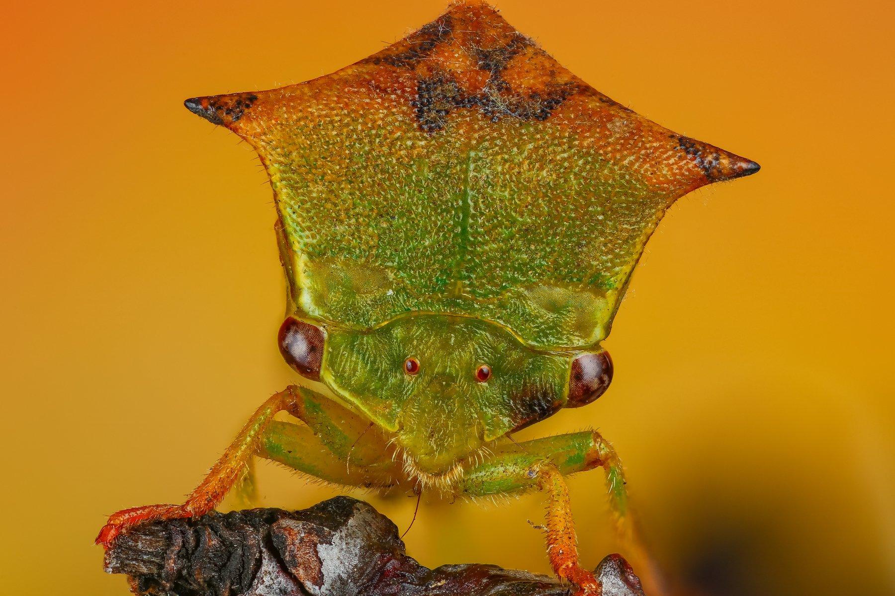 макро портрет насекомое зеленый желтый оранжевый цвет, Шаповалов Андрей