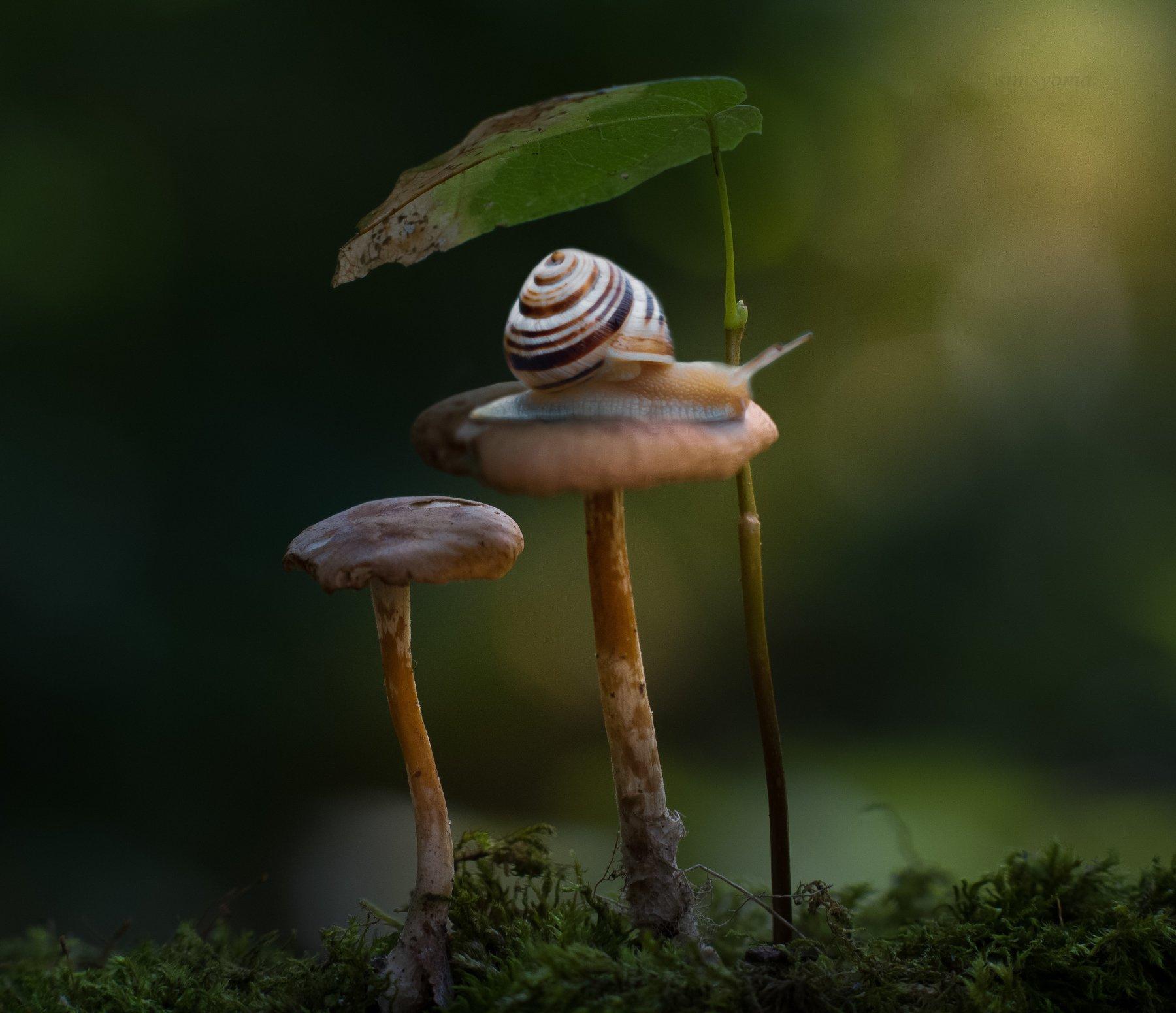 макро, природа, nature, macro, улитка, insect, snail, грибы, лес, Хворостяная Юлия