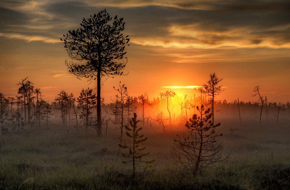 поньгома, рассвет, болото, белая ночь, карелия, деревья, Брагилевский Владимир