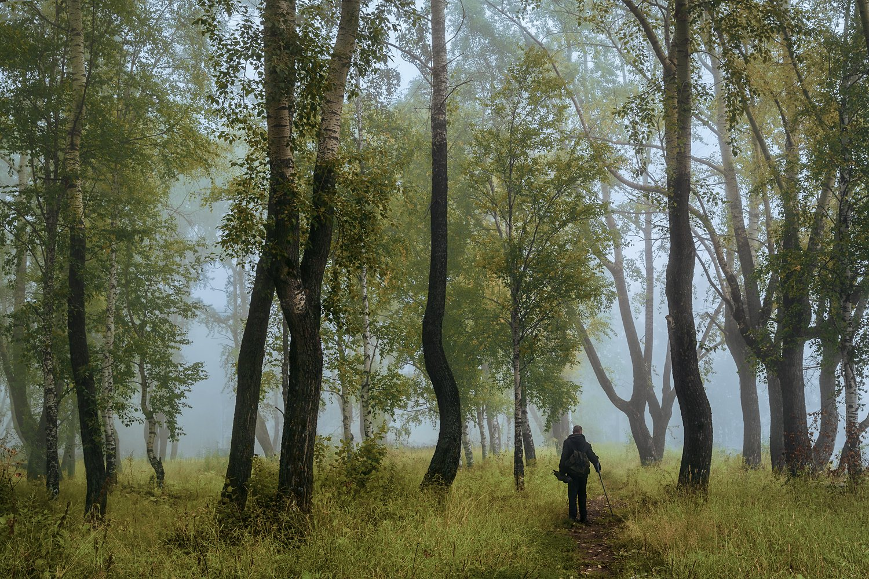 осень, сентябрь, лес, туман, утро, деревья, трава, человек, прохожий, Вера Ра