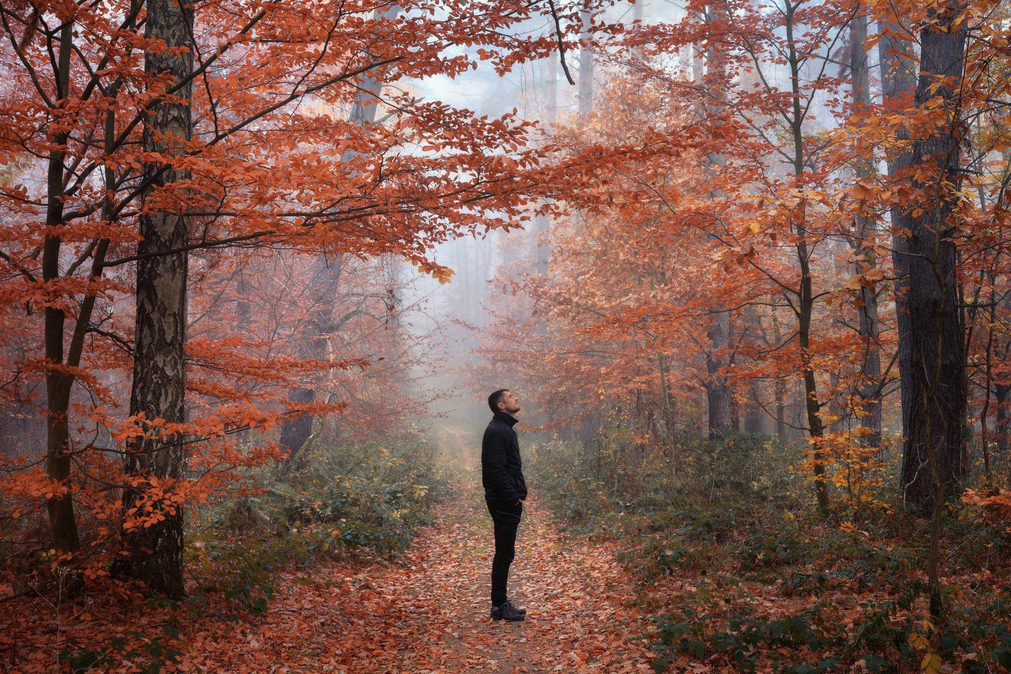 alone in the woods один в лесу forest foggy mist path road dranikowski trees autumn fall fog nikon, Radoslaw Dranikowski