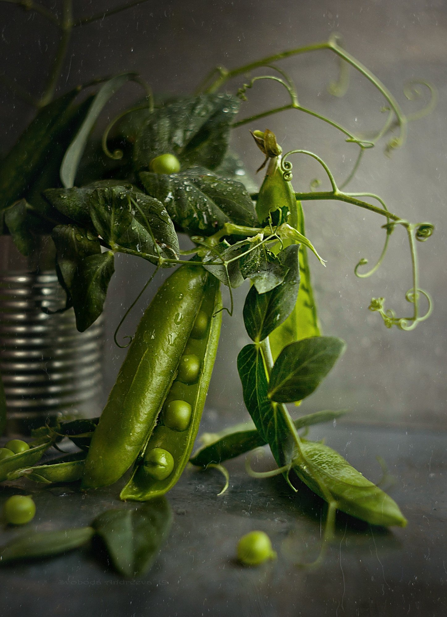 горошек зелень сладкий красивый натюрморт стручок лето воспоминания растение бобовые, Andreeva Svoboda