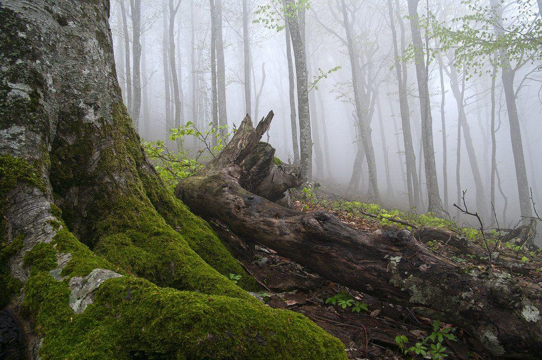 новороссийск, туман, Екатерина Васягина (Silent Candle)