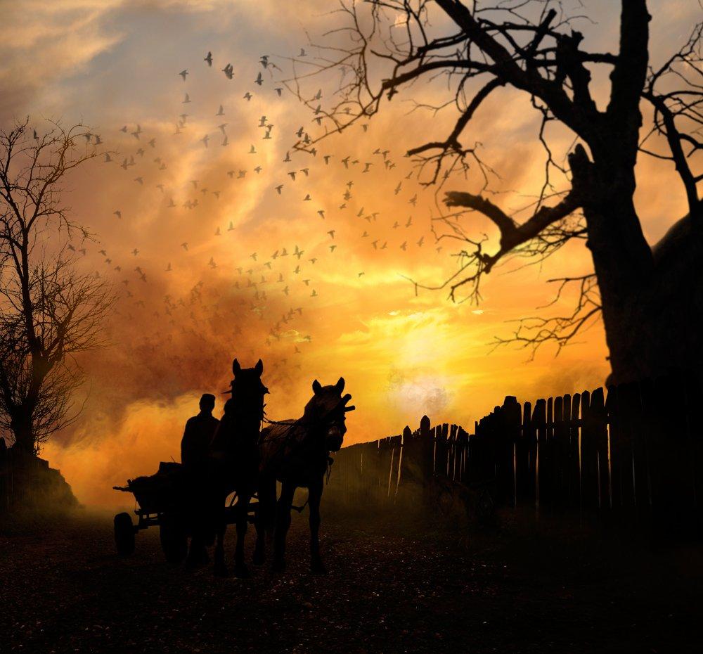 field, sky, morning, beauty, birds, clouds, grass, alone, green, smoke, horse, windy, workers, cart, Caras Ionut