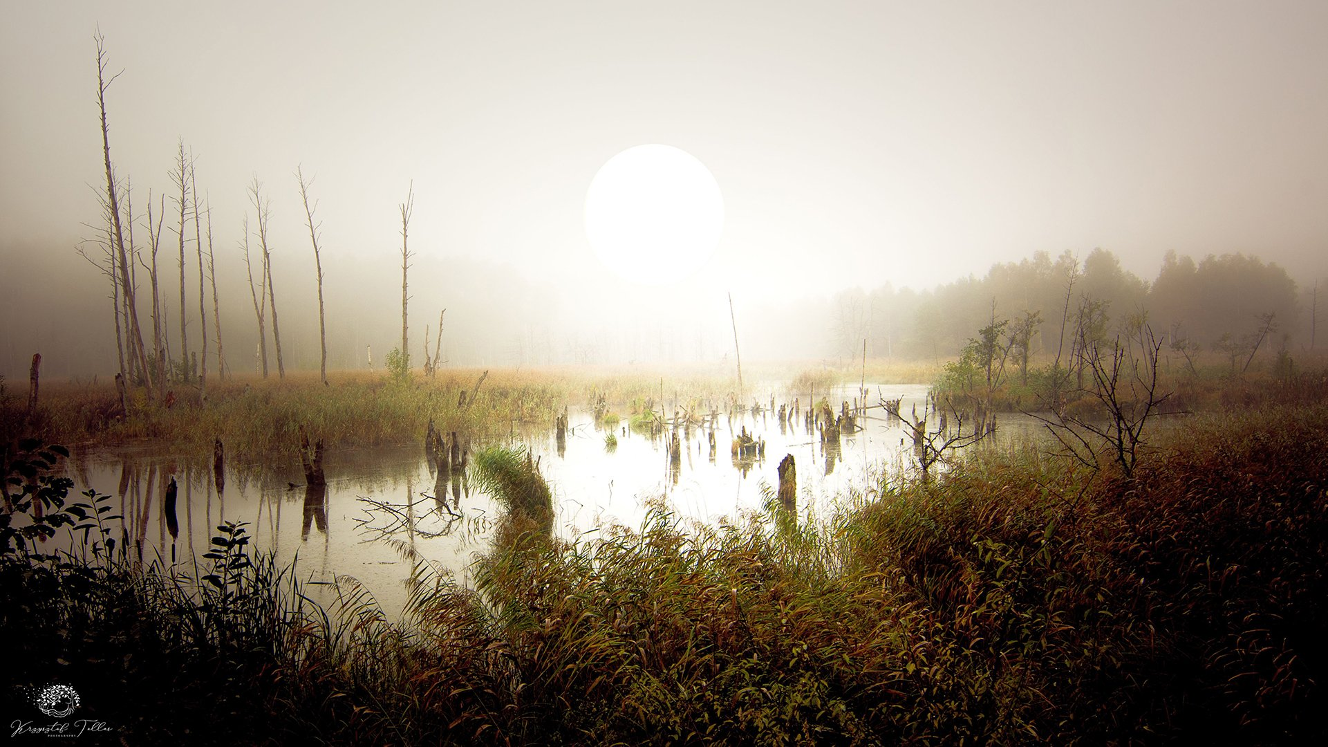 marshland, fog,landscape,autumn, nature, sky, sun, forest, trees, dawn, mist, water, nikon, swamp, light, , Tollas Krzysztof