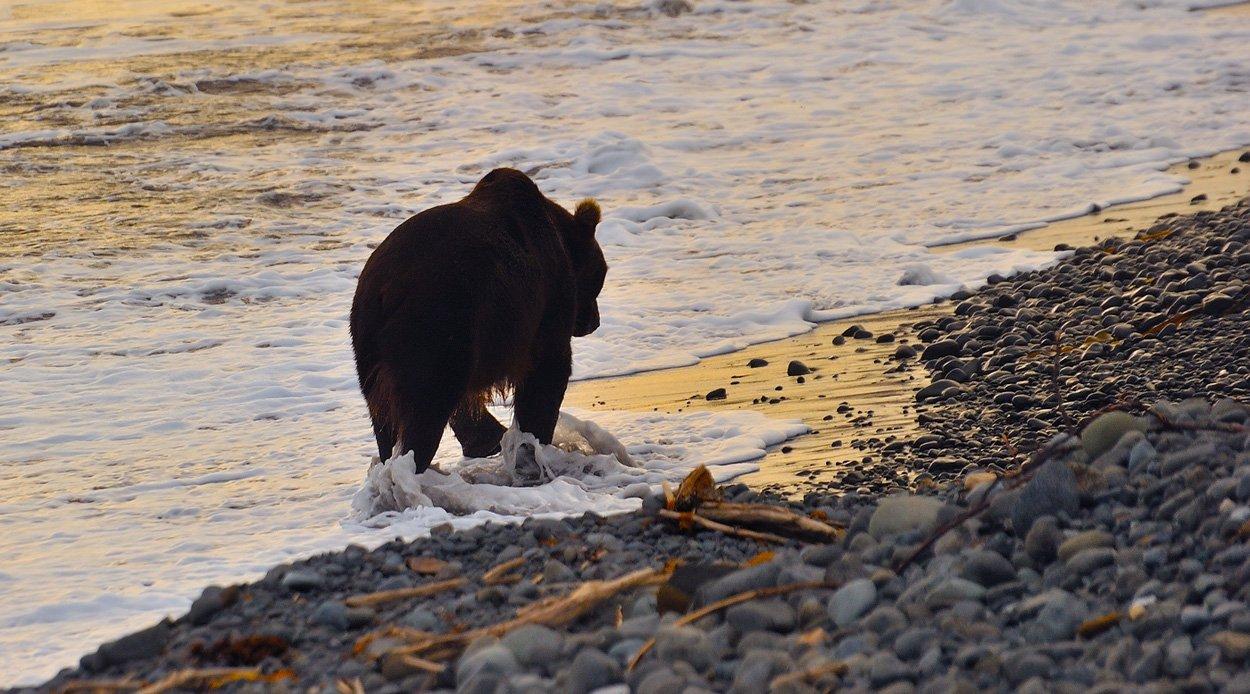 медведь, камчатка, кроноцкий заповедник, Руслан Елисеев