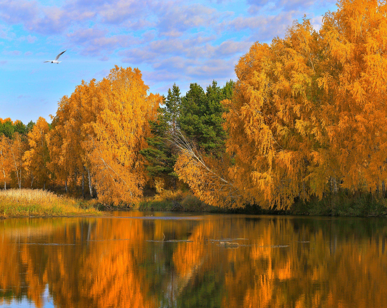 осень, Олег Богданов