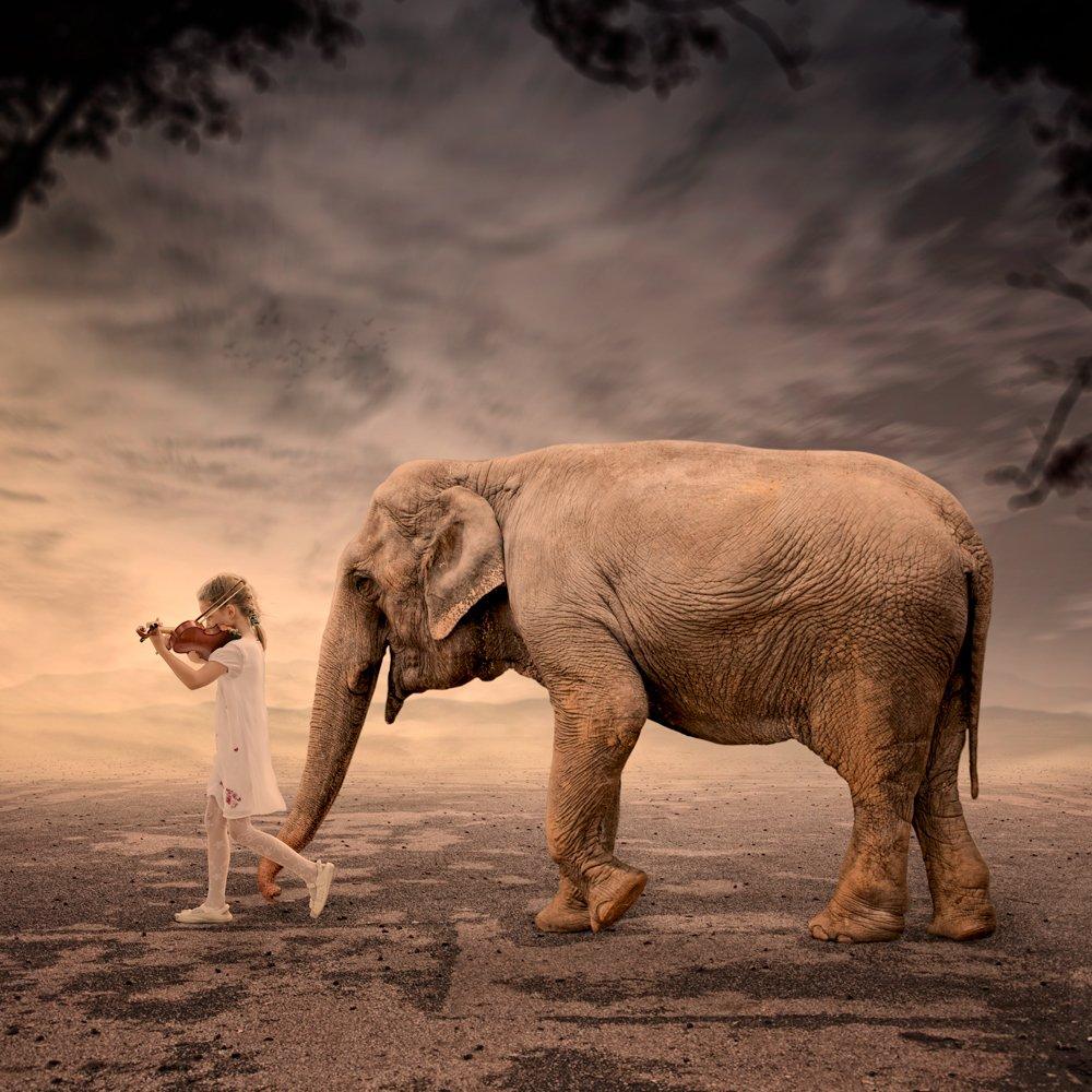 field, sky, red, girl, tree, violin, walking, ground, elephant, mounting, singing, Caras Ionut