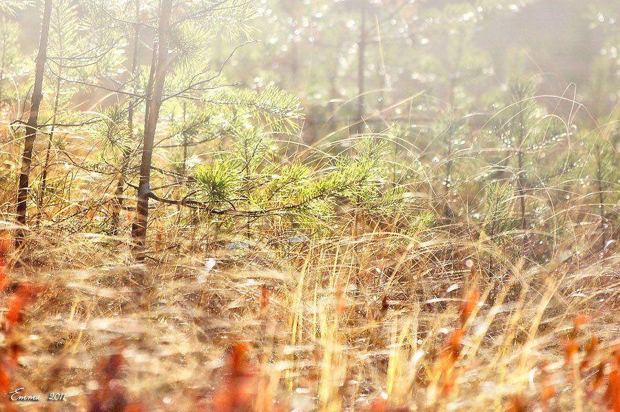 природа, осень, етти