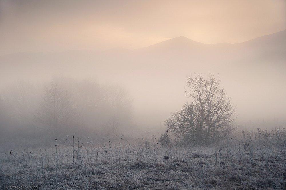 kovalenko, крым, пейзаж, туман, рассвет, дерево, Юрий Коваленко